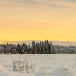 Kuldne talveõhtu