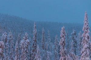 Lumised Lapimaa metsad